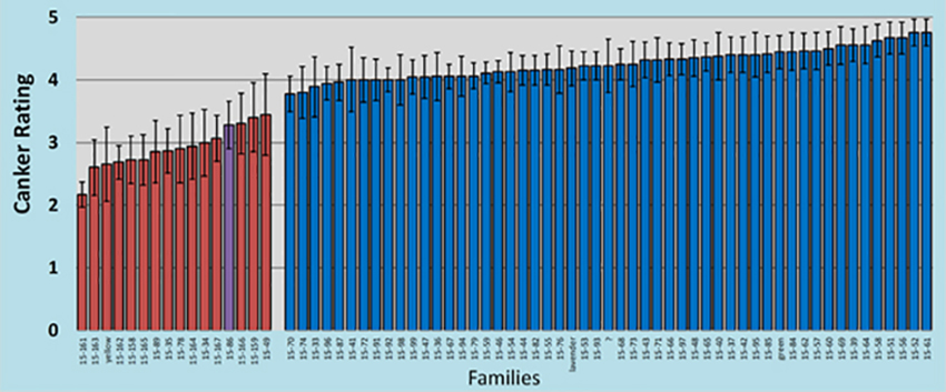 Graph of canker ratings and families