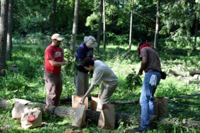 Studying the growth of a black walnut