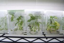 Molecular Tree Physiology Lab