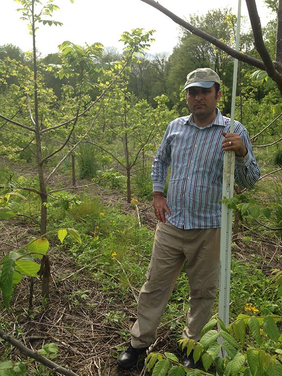 Aziz measuring trees