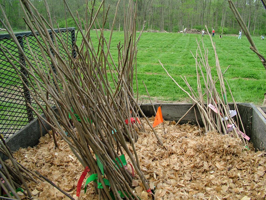 Bundles of Seedlings
