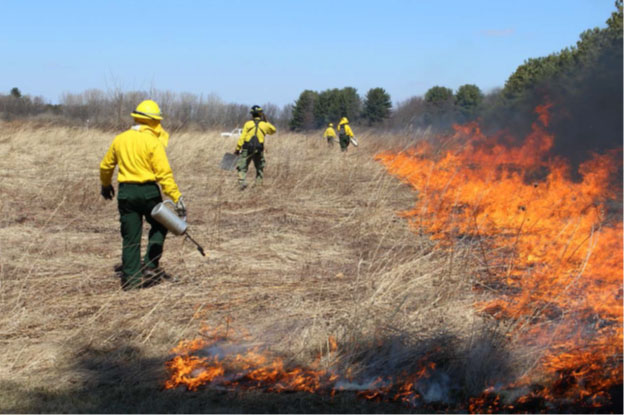 Image of a prescribed fire
