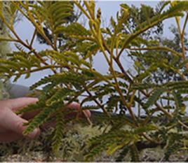 Image of plants for Genomics Lab