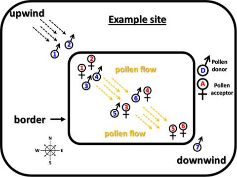 Image of Diagram