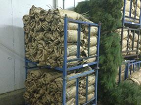 Image of butternut packs Vallonia