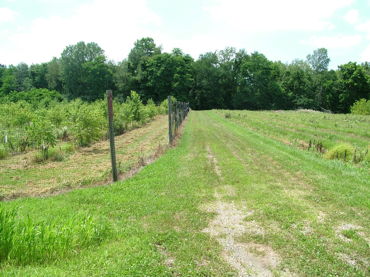 Image of fenced and unfenced
