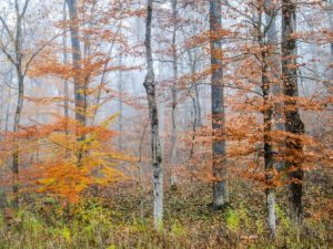 Image of the Yellowwood State Forest