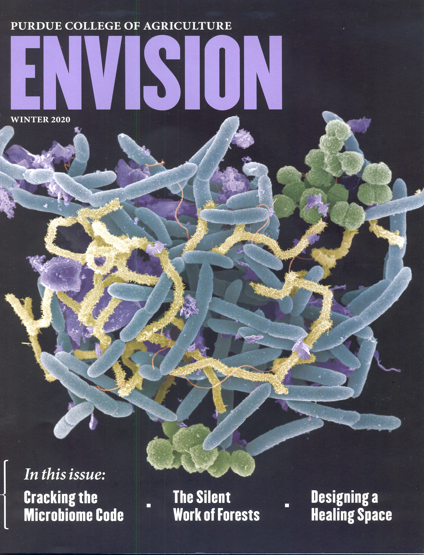 Image of the front cover of Envision