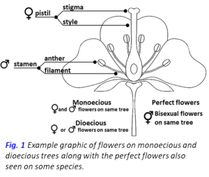 Graphic of flowers1